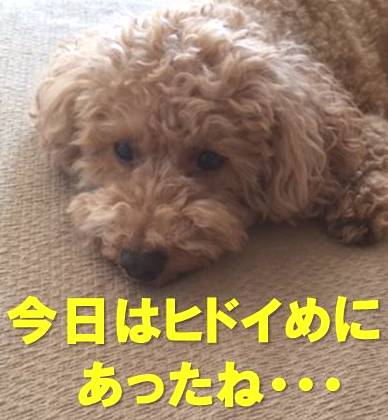 f:id:nanachan59:20180113191730j:plain