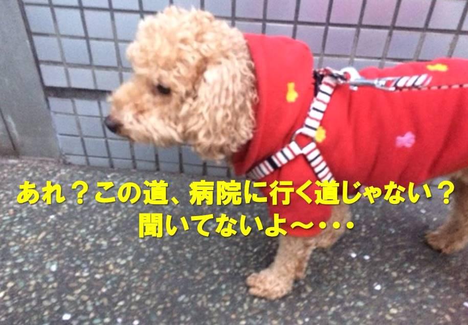f:id:nanachan59:20180113203757j:plain