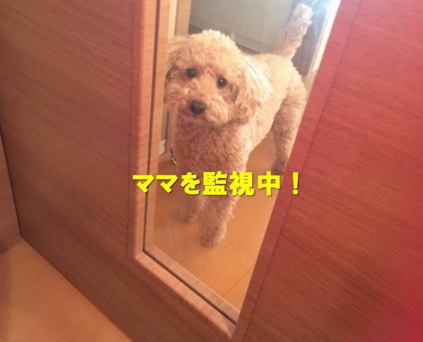 f:id:nanachan59:20180116175112j:plain