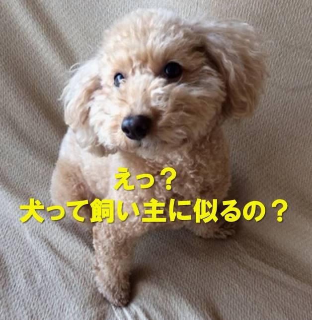 f:id:nanachan59:20180118200311j:plain