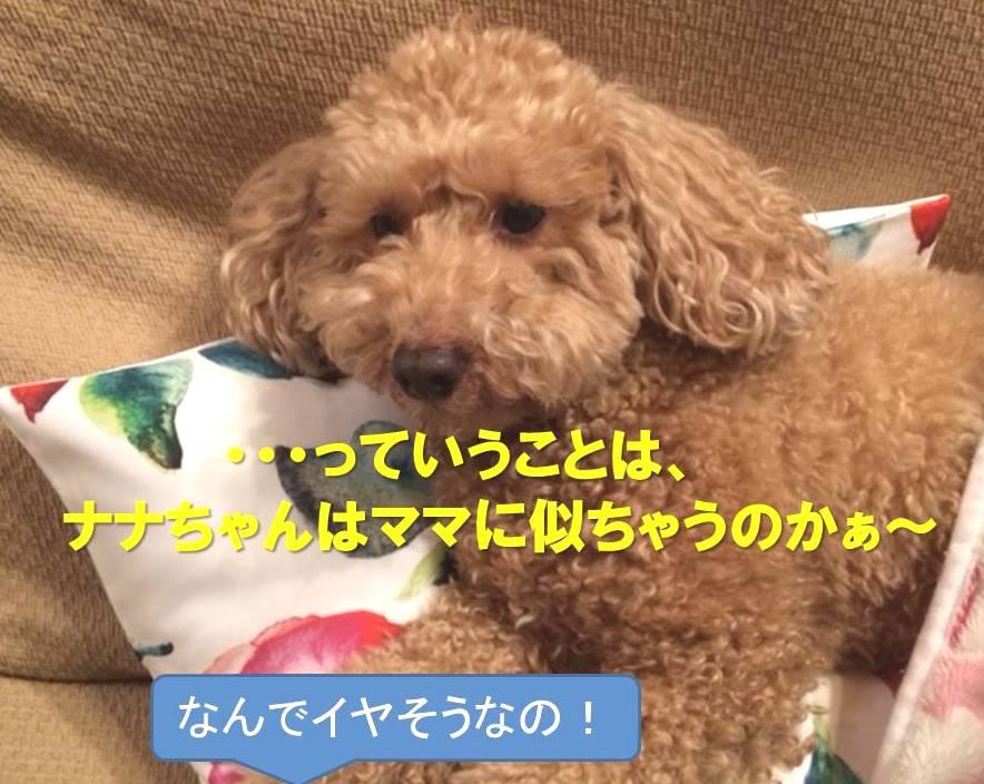 f:id:nanachan59:20180118201056j:plain