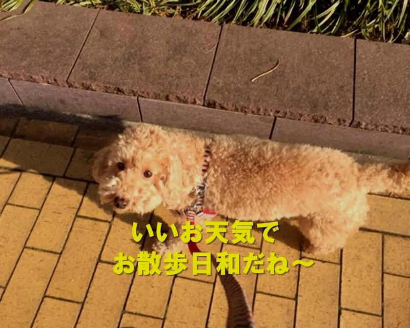 f:id:nanachan59:20180121160009j:plain