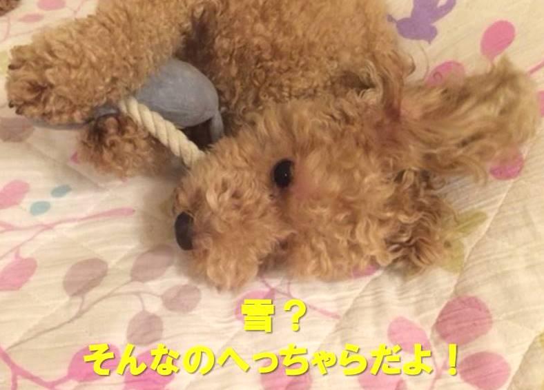 f:id:nanachan59:20180121161010j:plain