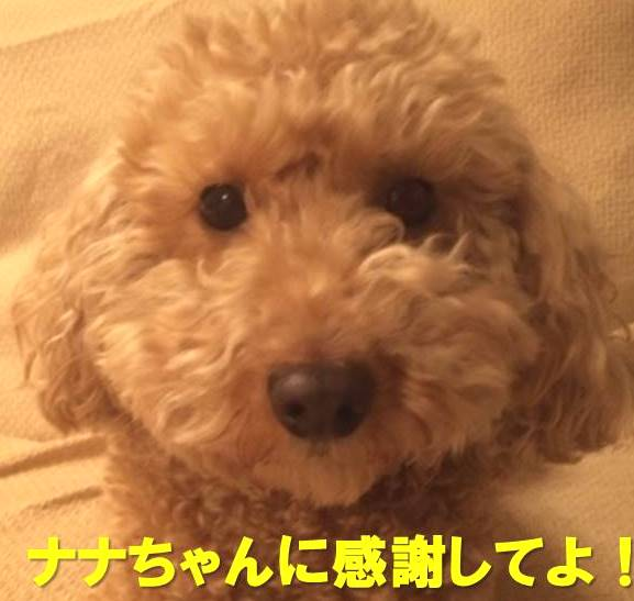 f:id:nanachan59:20180122224542j:plain