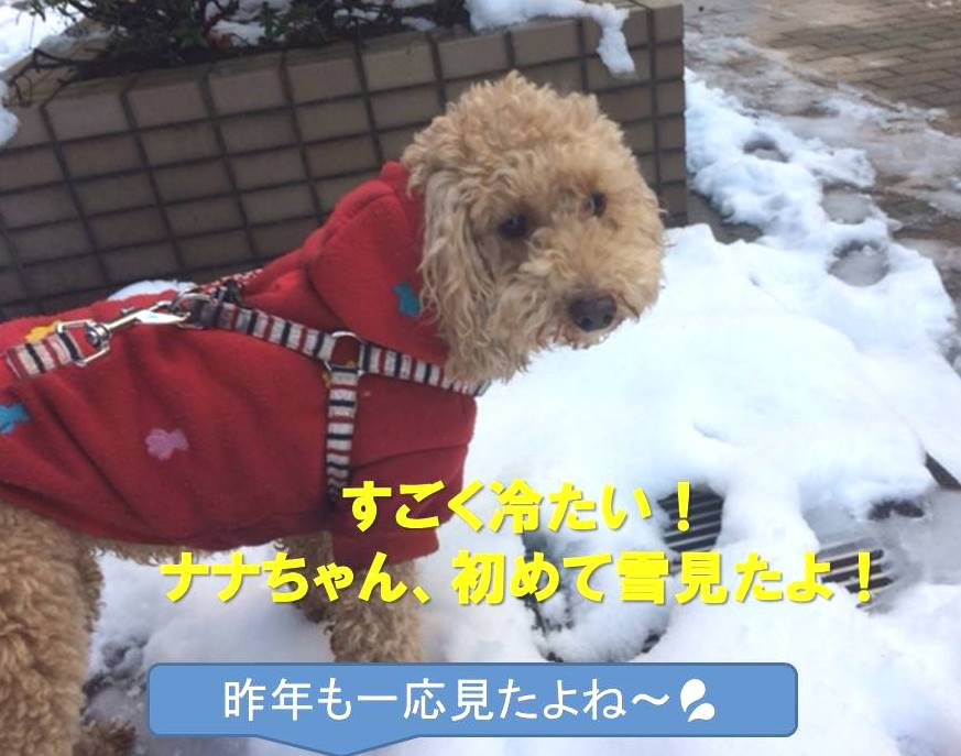 f:id:nanachan59:20180123150731j:plain