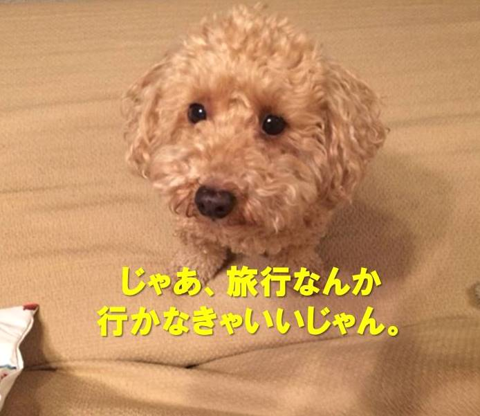 f:id:nanachan59:20180123233250j:plain