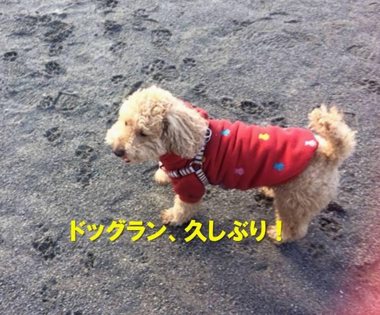 f:id:nanachan59:20180124164030j:plain