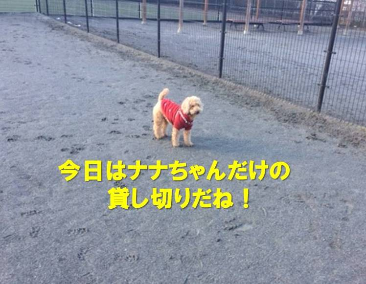 f:id:nanachan59:20180124164950j:plain