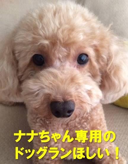 f:id:nanachan59:20180124170727j:plain