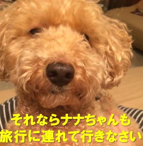 f:id:nanachan59:20180124213356j:plain