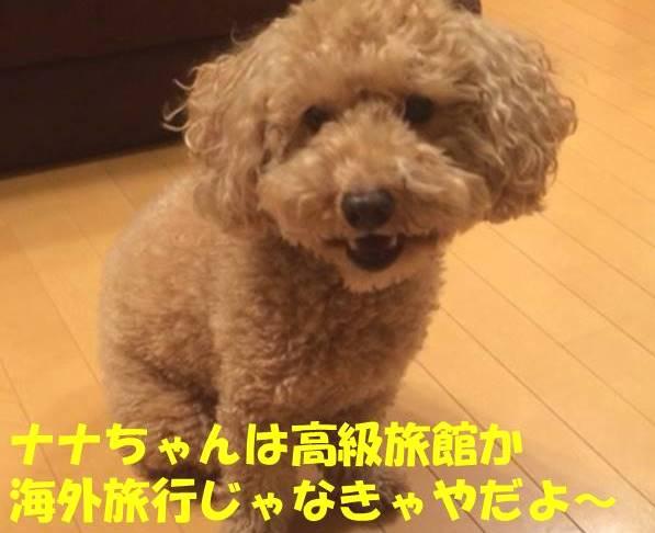 f:id:nanachan59:20180124215403j:plain