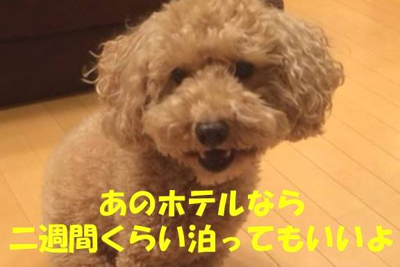 f:id:nanachan59:20180205204831j:plain