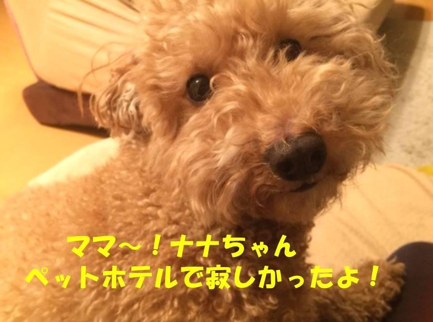 f:id:nanachan59:20180207183754j:plain