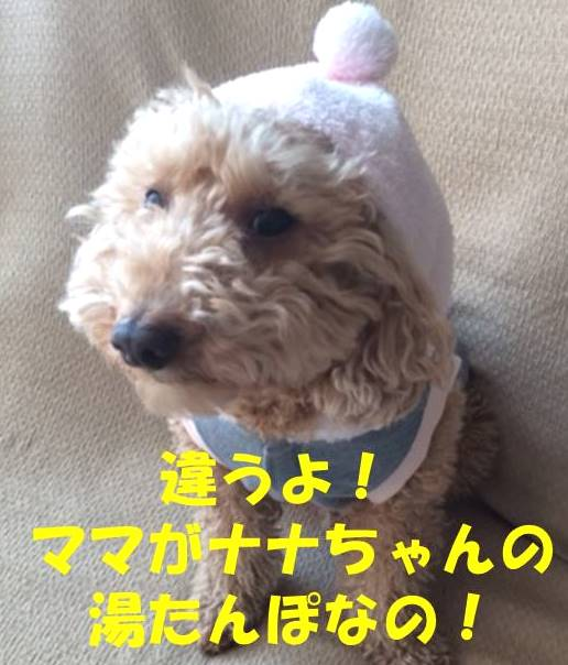 f:id:nanachan59:20180207184724j:plain