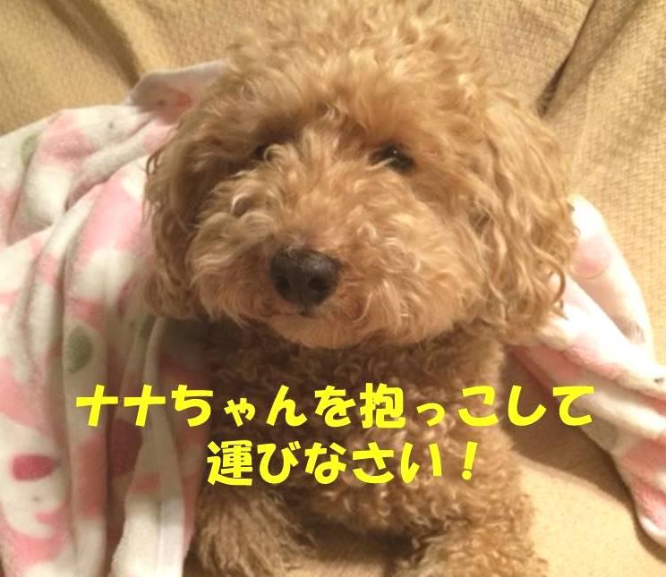 f:id:nanachan59:20180207203209j:plain