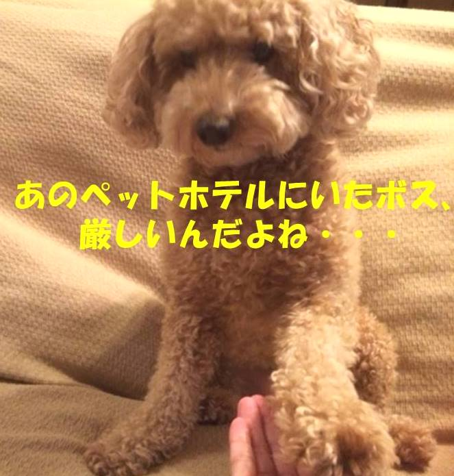 f:id:nanachan59:20180209212555j:plain