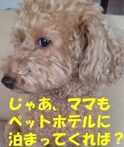 f:id:nanachan59:20180209214431j:plain