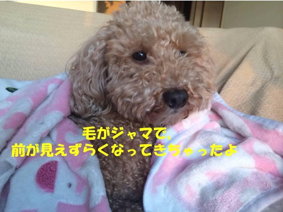 f:id:nanachan59:20180212174828j:plain