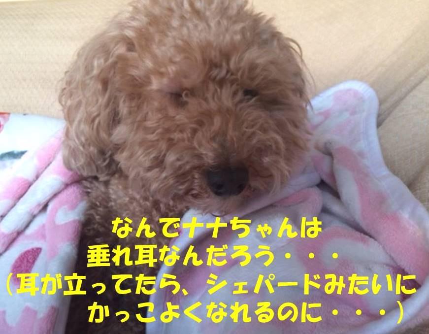 f:id:nanachan59:20180212231747j:plain