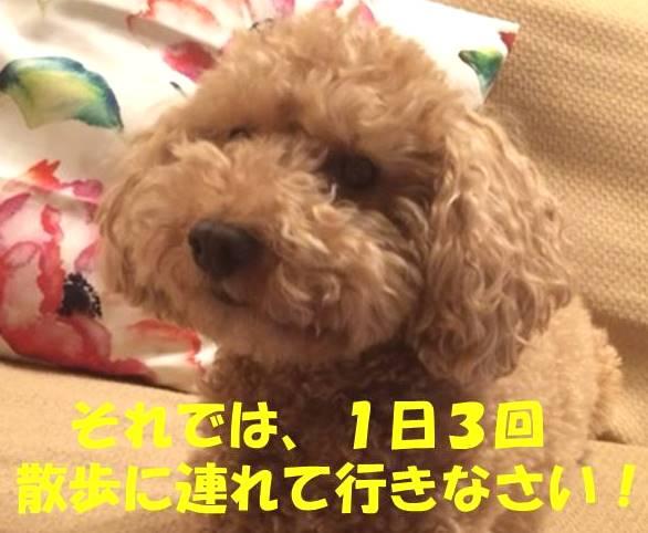 f:id:nanachan59:20180212232929j:plain