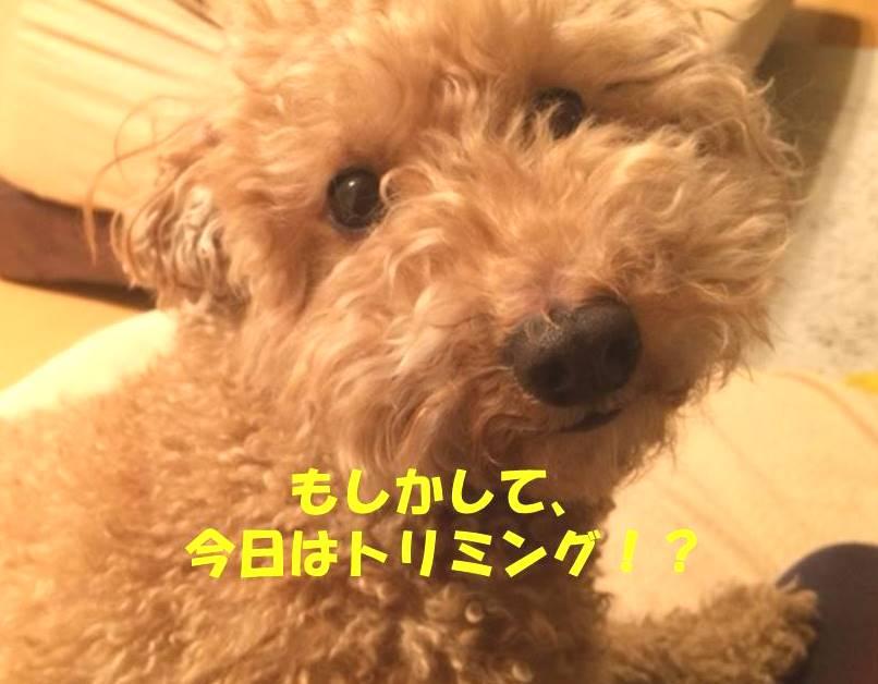 f:id:nanachan59:20180214183602j:plain