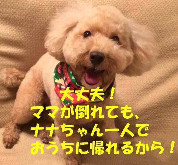 f:id:nanachan59:20180216202650j:plain
