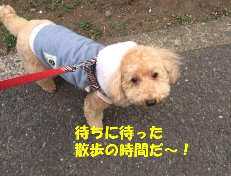 f:id:nanachan59:20180216203553j:plain