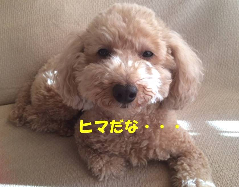 f:id:nanachan59:20180220155546j:plain