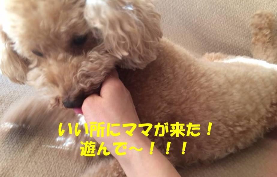 f:id:nanachan59:20180220160014j:plain