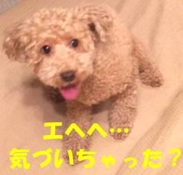 f:id:nanachan59:20180220160852j:plain