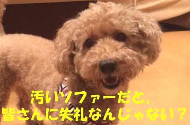 f:id:nanachan59:20180221152323j:plain