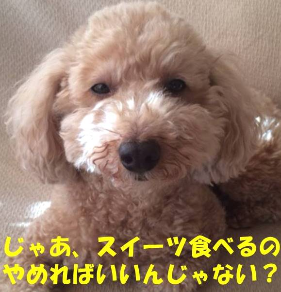 f:id:nanachan59:20180223152955j:plain