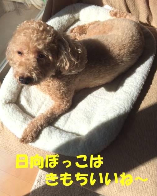 f:id:nanachan59:20180227203249j:plain