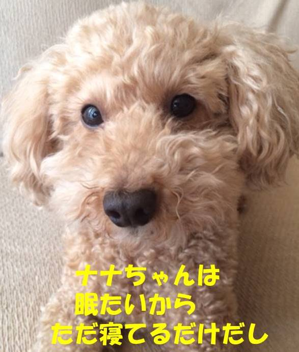 f:id:nanachan59:20180227204135j:plain