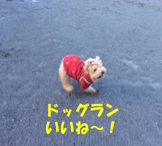 f:id:nanachan59:20180301190155j:plain