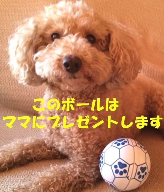 f:id:nanachan59:20180303191955j:plain
