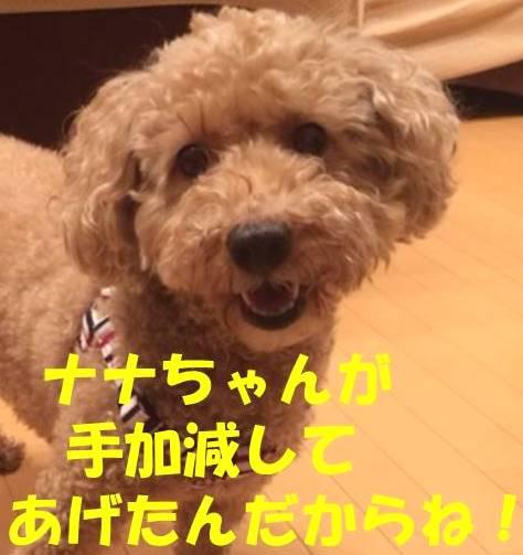 f:id:nanachan59:20180305182524j:plain