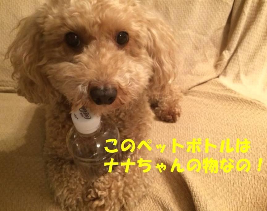 f:id:nanachan59:20180307205126j:plain