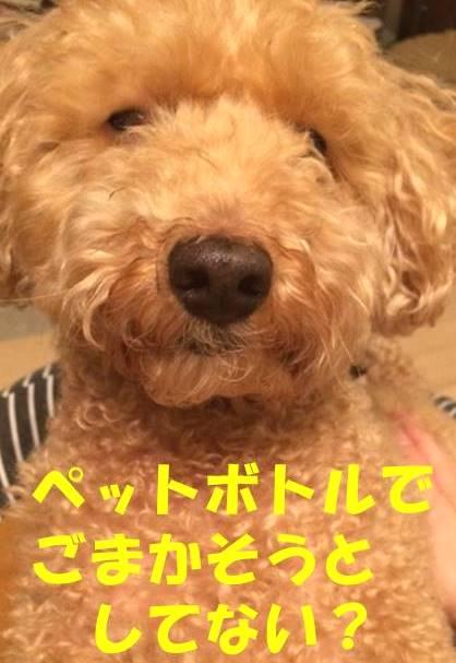 f:id:nanachan59:20180307210031j:plain