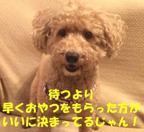 f:id:nanachan59:20180308084027j:plain
