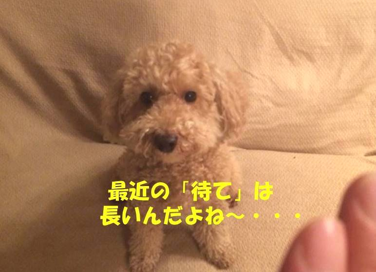 f:id:nanachan59:20180309183949j:plain