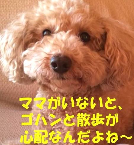 f:id:nanachan59:20180311151454j:plain