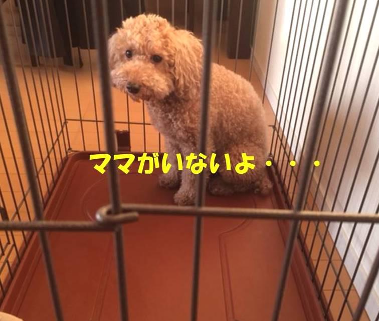 f:id:nanachan59:20180311175631j:plain