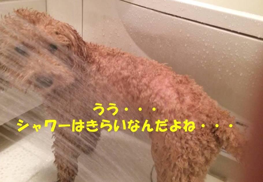 f:id:nanachan59:20180313184729j:plain