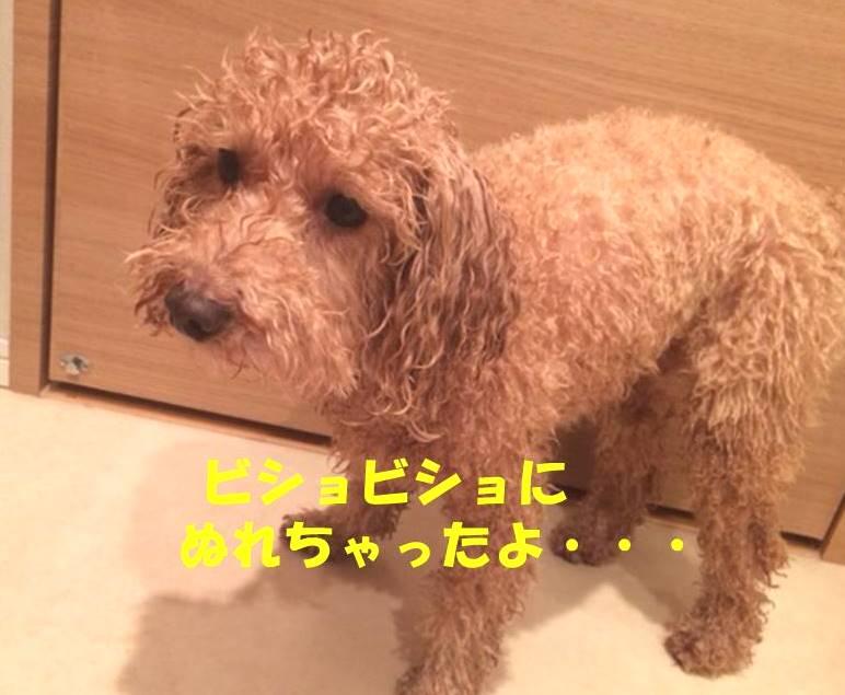 f:id:nanachan59:20180313185206j:plain