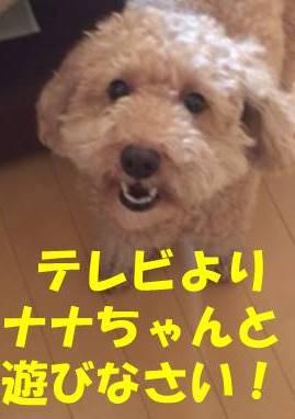 f:id:nanachan59:20180315175247j:plain