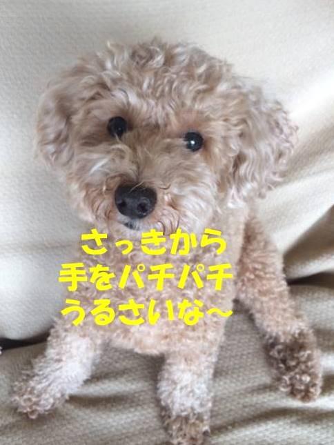 f:id:nanachan59:20180315175936j:plain