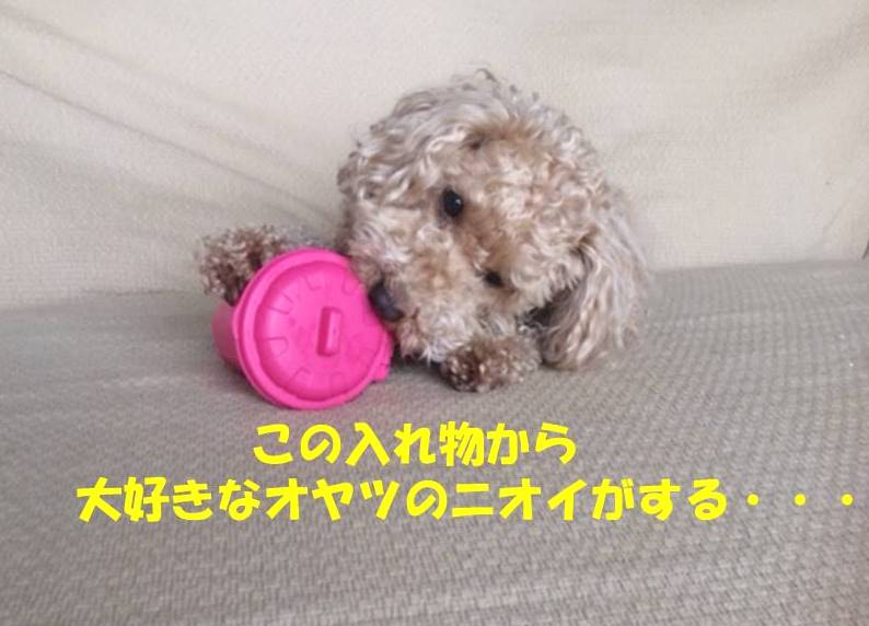 f:id:nanachan59:20180317150336j:plain