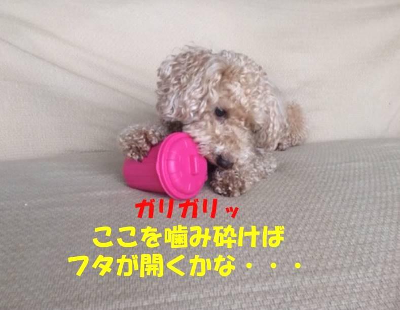 f:id:nanachan59:20180317151333j:plain