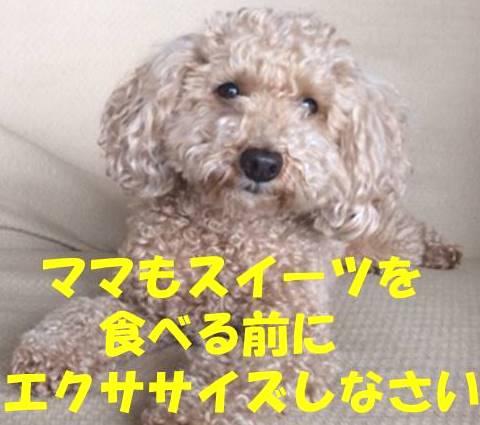 f:id:nanachan59:20180317203040j:plain